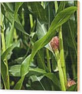 Young Maize Plant Wood Print