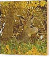 Young Male Buck Wood Print