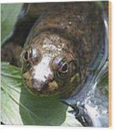 Young Mill Lake Frog Wood Print