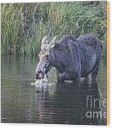 Young Moose Wood Print