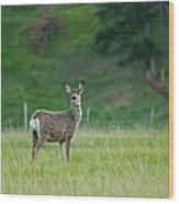 Young Mule Deer Wood Print