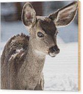 Young Mule Deer Fawn In Yosemite National Park Wood Print
