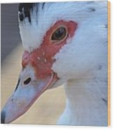 Young Muscovy Closeup Wood Print