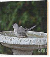 Young Northern Mockingbird In Bird Bath Wood Print