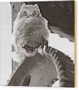 Young Owl On Wheel Wood Print