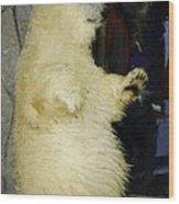Young Polar Bear And Boy  Wood Print