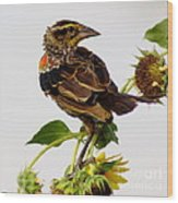 Young Redwing In The Wind Wood Print