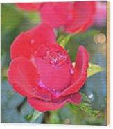 Young Rose Of November Wood Print
