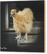 Young Silkie Wood Print