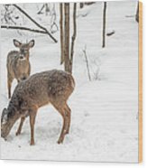 Young Spike Buck And Doe Whitetail Deer In Snowy Woods Wood Print