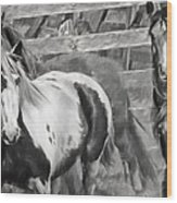 Young Stallions Wood Print