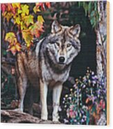 Young Timber Wolf Wood Print