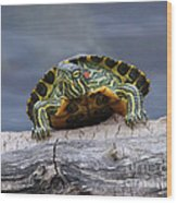 Young Turtle Wood Print
