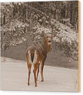 Young White Tailed Buck In Winter Wood Print