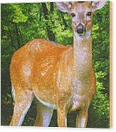 Young Whitetailed Deer Buck Digital Art Wood Print