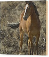 Young Wild Mare   #0307 Wood Print