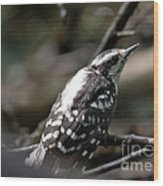 Young Woodpecker Wood Print
