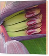 Your Treasure - Mai'a Maoli - Tropical Hawaiian Banana Flower  Wood Print
