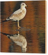 Youthful Reflections Wood Print by Tony Beck