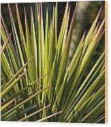 Yucca 1 Wood Print