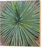 Yucca 2 Wood Print