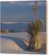 Yucca At White Sands Wood Print