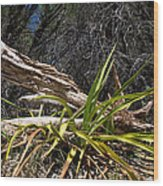 Pedernales Park Texas Yucca By The Dead Tree Wood Print