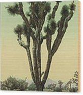 Yucca Cactus At Hesperia California Wood Print