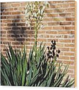 Yucca In The Morning Wood Print