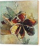 Yucca Pod - Barbara Chichester Wood Print