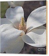 Yulan Magnolia  4591 Wood Print