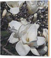 Yulan Magnolia  4753 Wood Print
