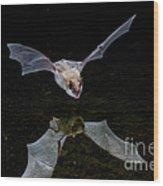 Yuma Myotis Bat Wood Print