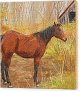 Yuma- Stunning Horse In Autumn Wood Print