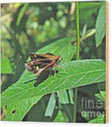 Zabulon Skipper Butterfly - Poanes Zabulon - Female Wood Print