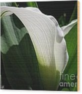 Zantedeschia Named Crystal Blush Wood Print