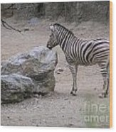 Zebra And Rock Wood Print
