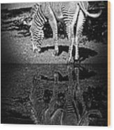 Zebra At The Waters Edge Wood Print