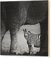 Zebra Barking Wood Print
