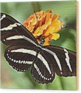 Zebra Butterfly Beauty 1 Wood Print