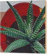 Zebra Cactus In Red Glass Wood Print