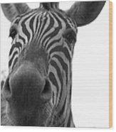 Zebra Close-up Wood Print