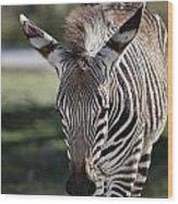 Zebra Crossing V7 Wood Print