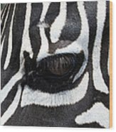 Zebra Eye Wood Print