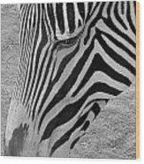 Zebra Face Wood Print