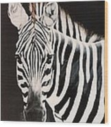 Zebra facing left Wood Print