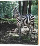 Zebra Forest 2 Wood Print