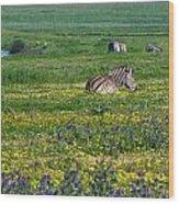 Zebra Heaven.. Wood Print