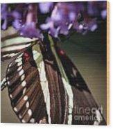 Zebra Heliconian Heliconius Charithonia Wood Print