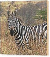 Zebra In Serengeti Wood Print